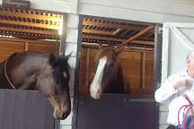 Brantome Police Horses & Friends, Saint-Pancrace, France