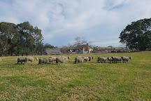 Belgenny Farm, Camden, Australia