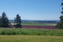 A Great Oregon Wine Tour, Portland, United States