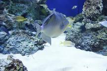 Istanbul Sea Life Aquarium, Istanbul, Turkey