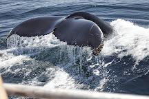 Newburyport Whale Watch, Newburyport, United States