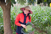 Manh's Farm Tour and Home Cooking Class in Hanoi, Hanoi, Vietnam