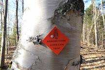 Wiessner Woods, Stowe, United States