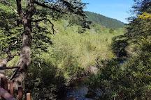 Reserva Nacional Los Ruiles, Chanco, Chile
