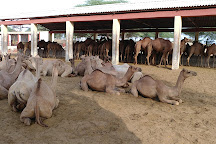 National Research Centre on Camel, Bikaner, India