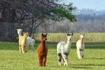 Maple View Farm Alpacas, Brandon, United States