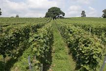 Stopham Vineyard and Winery, Pulborough, United Kingdom