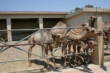Camel Park, Mazotos, Cyprus