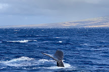 Pacific Whale Foundation, Lahaina, United States