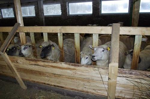 Roosu farm