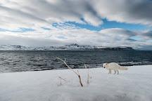 Hornstrandir Nature Reserve, Bolungarvik, Iceland