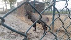 Mini Zoo Gujranwala