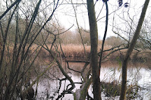 Norwood Road Nature Reserve, March, United Kingdom