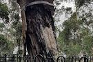 Explorers Tree