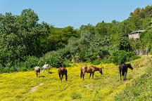 Circolo Ippico Roma River Ranch, Rome, Italy