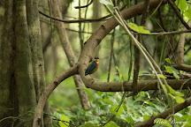 Kaeng Krachan National Park, Prachuap Khiri Khan Province, Thailand