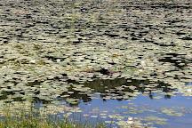 Bass Lake, Blowing Rock, United States