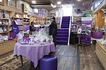 La Maison de la Violette, Toulouse, France