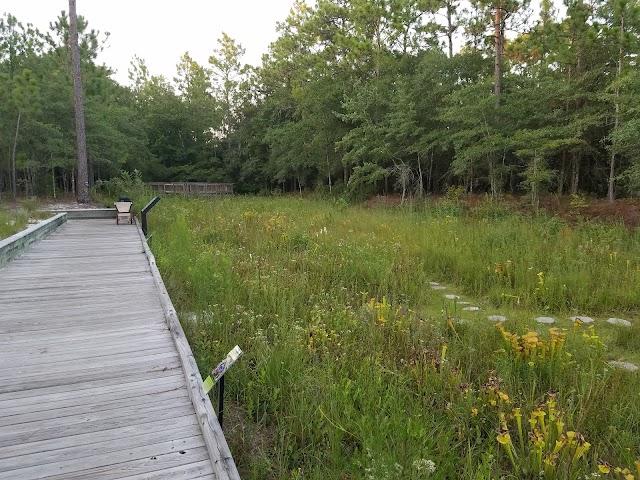 Stanley Rehder Carnivorous Plant Garden at Piney Ridge Nature Preserve - Wilmington