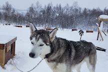 Senja Husky Adventure, Senja, Norway