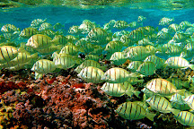 Kona Ocean Experience, Kailua-Kona, United States