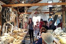 Musee du Squelette, Notre-Dame-des-Sept-Douleurs, Canada