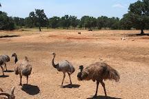 Exotic Resort Zoo, Inc., Johnson City, United States