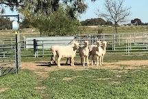 Shear Outback, Hay, Australia