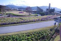 Yamaguchi Flower Land, Yanai, Japan