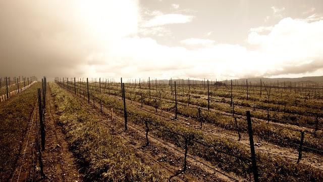 Carhartt Vineyard
