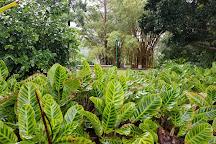 Wahiawa Botanical Garden, Wahiawa, United States