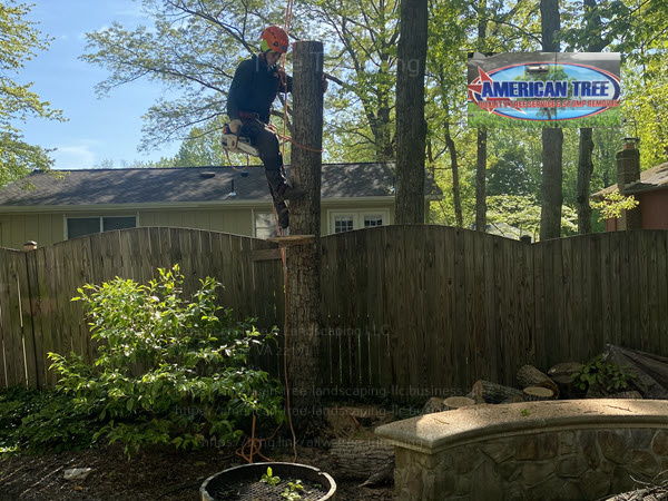 Tree removal service being completed by an arborist with American Tree & Landscaping LLC in Woodbridge, VA