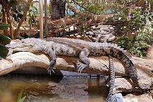 Phoenix Herpetological Sanctuary, Scottsdale, United States