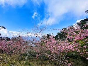 Baoshanerjituanyinghua Park