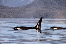 Juneau Whale Watch, Juneau, United States