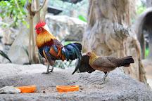 Chiang Mai Zoo, Chiang Mai, Thailand