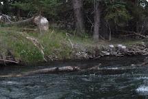 Barker-Ewing Scenic Float Trips, Grand Teton National Park, United States