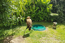 Baytree Owl and Wildlife Centre, Spalding, United Kingdom