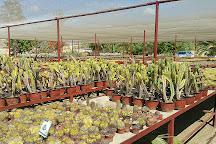 Wirikuta Botanical Cactus Garden, San Jose del Cabo, Mexico