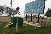 Pulicat Bird Sanctuary, Nellore District, India