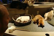 Cat Cafe MoCHA, Shibuya, Shibuya, Japan