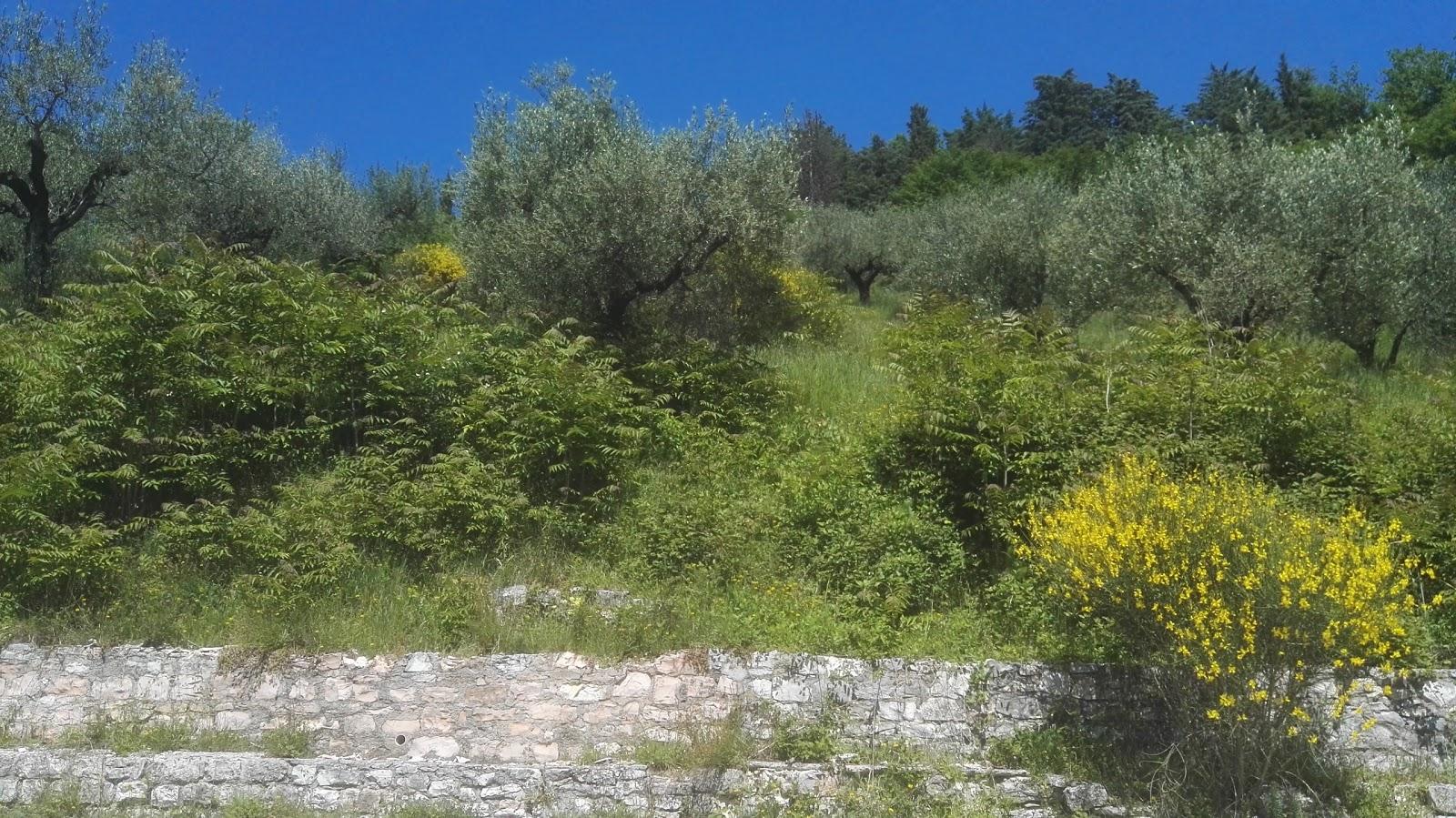 istituto don bosco verde soggiorno - around guides - Verde Soggiorno Don Bosco