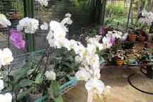 Orchid World & Tropical Flower Garden, Saint George Parish, Barbados