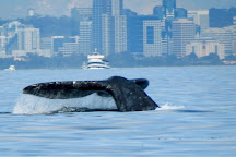 Offshore Blue Adventures, San Diego, United States
