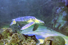 Aquarium de Vannes, Vannes, France