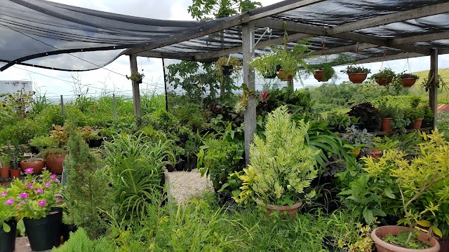 Steward & Samantha's Greenhouse