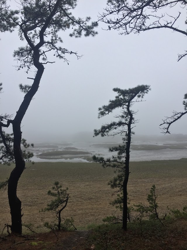 Pilgrim Spring Conservation Area