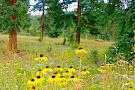 Staunton State Park