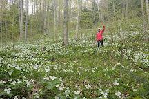 Saugeen Bluffs Conservation Area, Paisley, Canada
