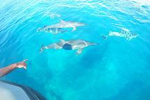 Abyss Plongee, Noumea, New Caledonia